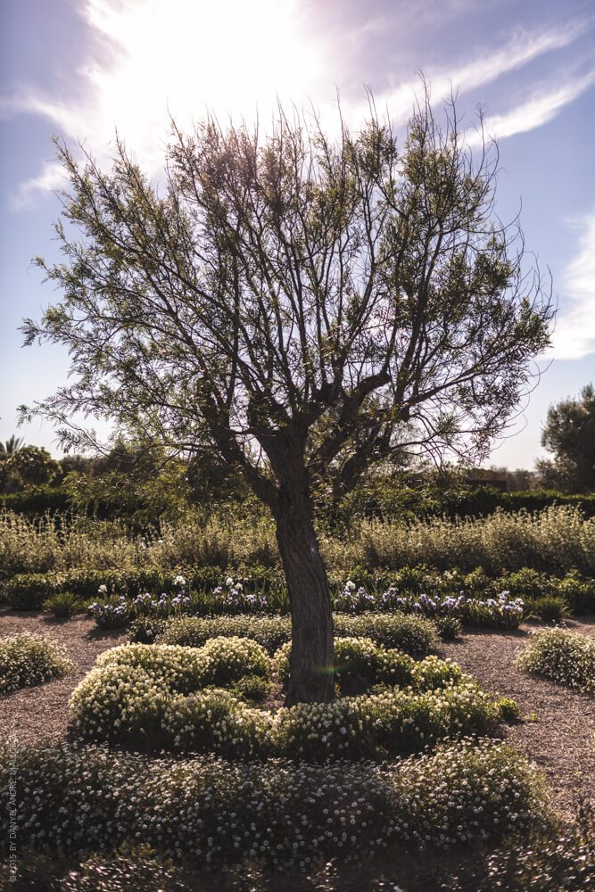 Photographer Mallorca - This tree is our set for the little mermaids garden